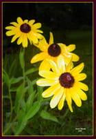 """1, 2, 3 Yellow Flowers""."