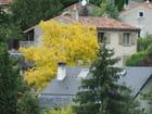 La maison à l arbre jaune par Patrice PLANTUREUX sur L'Internaute