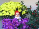 Le nain de jardin par Genevieve LAPOUX sur L'Internaute