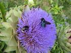 Fleurs d\'artichaut - monique solteiro-giboury