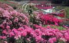 Parterre de roses par patrick le coz sur L'Internaute