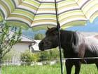 Parasol - laura bouche