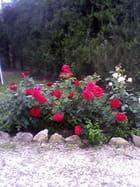 Rouge et blanc - Henri PENDOLA