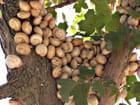 L\'arbre à escargots par Huguette Roman sur L'Internaute