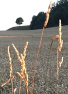 Vue de campagne - matthieu gigon