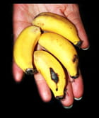 Bananes - Michel-Marie Solito de Solis