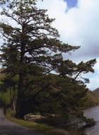 Le géant au bord de l'eau. - Isabelle MAURETTE
