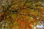 Parasol en automne - Serge AGOMBART