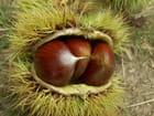 Fruits d' automne par Gérard AUDIC sur L'Internaute
