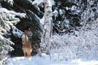 Équitation d'hiver 2 - Dennis Neault