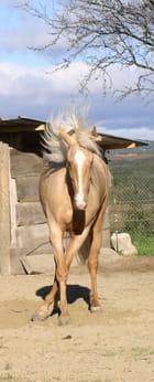 Mon cheval Caly danse par Corinne BESNIER sur L'Internaute