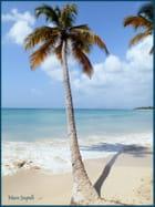 Belle plage - Marie JOUPELLE