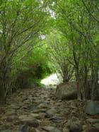 Chemin du Pain de Sucre - sylvie carbonnel