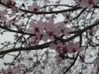 Fleurs de prunus - Sandrine PELTAIS
