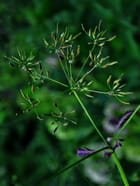 Plante sauvage - aldo bertotti