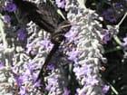 Papillon par Naomi RUSSO sur L'Internaute