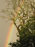 Arc-en-ciel d'automne - Cathie BERTIN