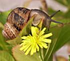 L'escargot amoureux d'une fleur par Huguette Roman sur L'Internaute