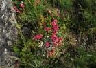 Fleurs sauvages - monique giorgione