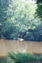 les arbres au bord du lac - Genevieve LAPOUX