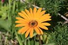 Fleur de printemps - Eric MASSON