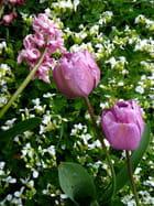 Tulipes et corbeille d'argent par Jacqueline DUBOIS sur L'Internaute