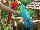 Deux oiseaux s'aimaient d'amour tendre par Marie-france RAIMBAULT sur L'Internaute