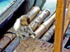 Petit singe bricoleur par Jean Claude ALLIN sur L'Internaute