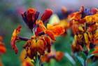Fleurs au printemps - Claude Malet