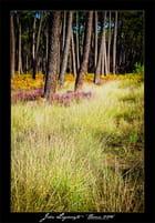 Forêt de pins maritimes par John LAGOUEYTE sur L'Internaute