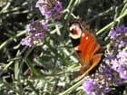 Papillon - Naomi RUSSO