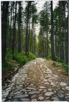 Voie romaine en forêt par Marie-José Martino sur L'Internaute