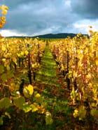L'or des vignes - sylvie rigaud