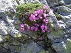 Fleurs de montagne par Daniel Delaville sur L'Internaute