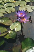 Lotus du Viêtnam - murielle hué