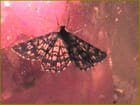 Papillon de nuit - robert bassard