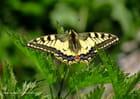 Le papillon - Bernard BRICOUT