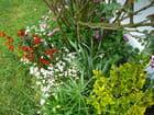 Parterre de fleurs - Jacqueline DUBOIS