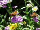 Amaryllis et fleurs champêtres - Malou TROEL