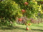 L'automne en Provence - Brigitte CORDONNIER