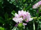 Fleur en gros plan - Isabelle TARAS