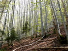 Forêt - NICOLE LOEB