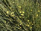 Eclat jaune et vert - Annie Van Gijseghem