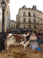 Ferme en ville, à Nantes - Laurent ALLENOU