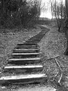 Escaliers par Sebastien Pery sur L'Internaute