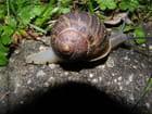 Escargot en balade - Isabelle TARAS