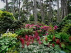 Parc floral de Vincennes en Juillet - Jacqueline DUBOIS