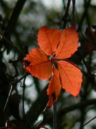 Rouge d'automne - Claire SERVY
