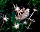 Chrysalide et fleurs par Huguette Roman sur L'Internaute