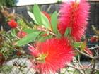 Arbuste à fleurs! par françoise raunier sur L'Internaute